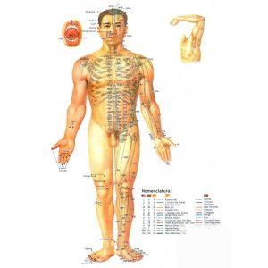 triptico-guia-practica-anatomofisiologica-de-la-medicina-tradicional-china-1